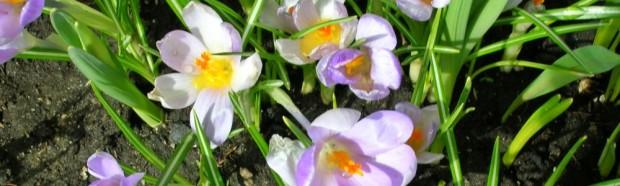 cropped-spring-2011-0743.jpg