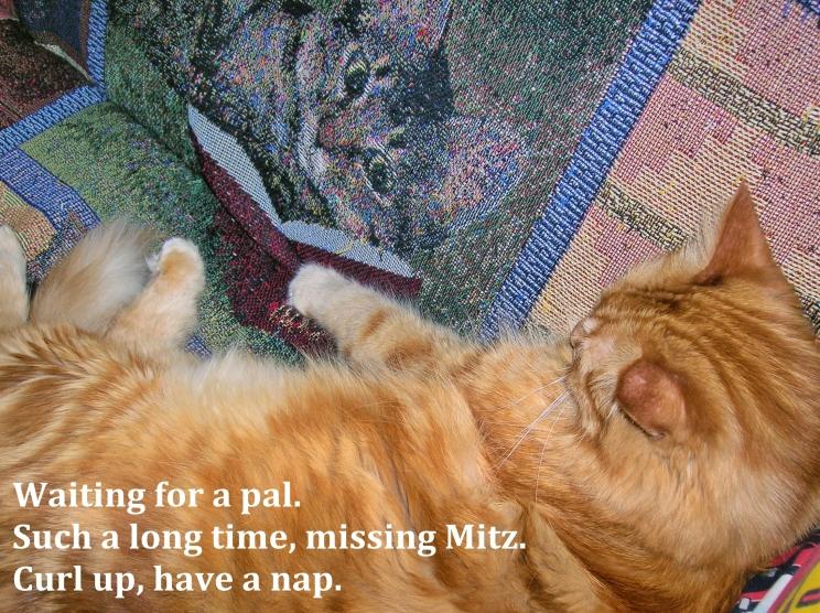 mr cheddar missing mitz