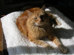 sun bath ched