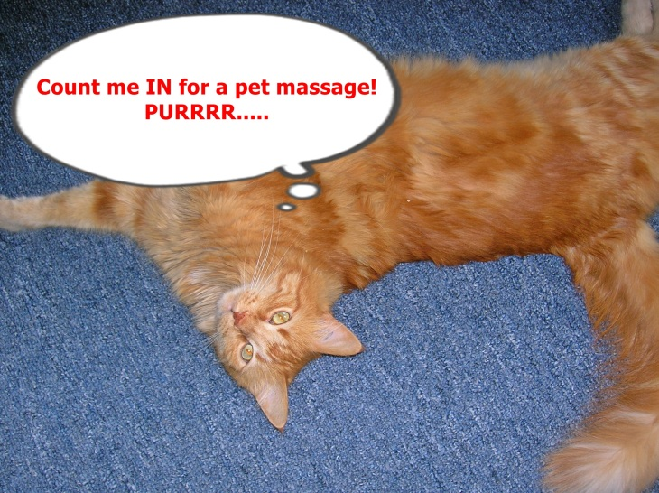 pet massage