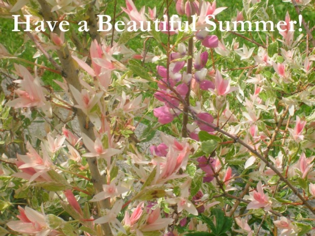 have a beautiful summer