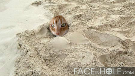 mr cheddar in the sand